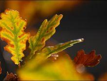 img_4698_herfst-bladeren