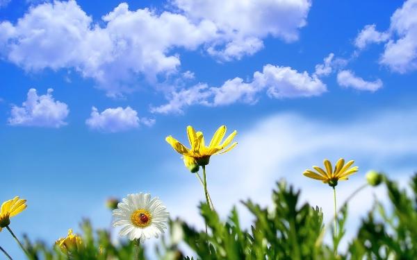 hd-achtergrond-met-bloemen-en-een-blauwe-lucht-hd-wallpaper